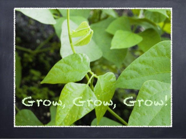 Grow, Grow, Grow!