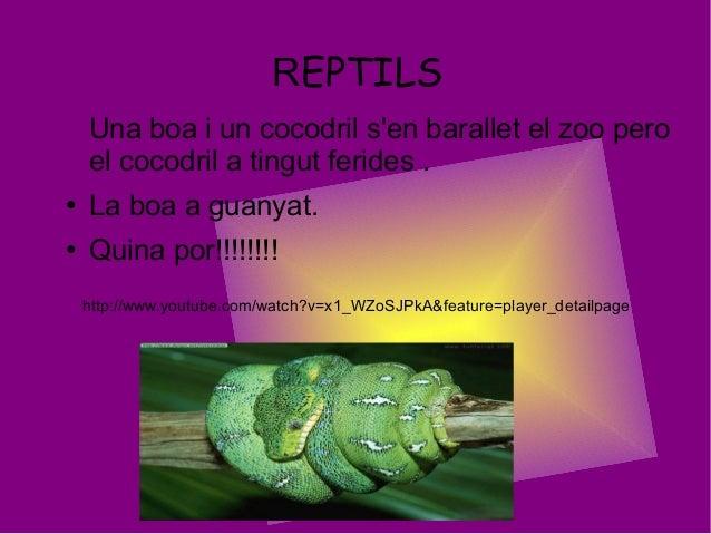 REPTILSUna boa i un cocodril sen barallet el zoo peroel cocodril a tingut ferides .● La boa a guanyat.● Quina por!!!!!!!!h...
