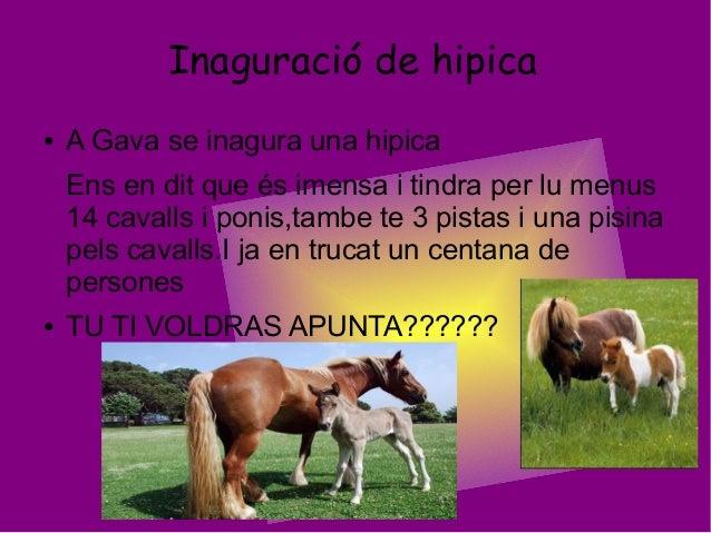 Inaguració de hipica● A Gava se inagura una hipicaEns en dit que és imensa i tindra per lu menus14 cavalls i ponis,tambe t...