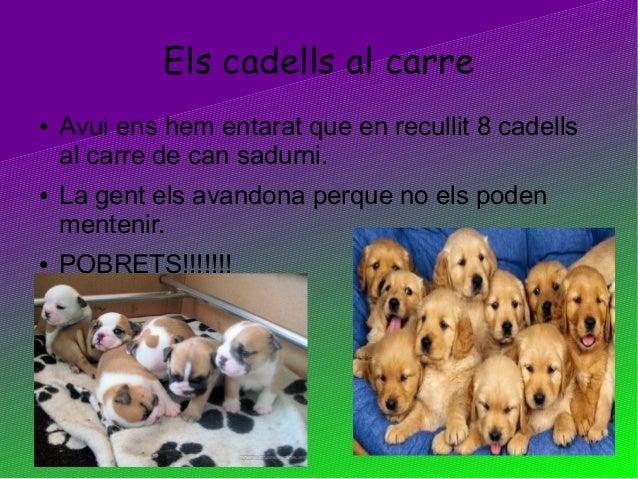 Els cadells al carre● Avui ens hem entarat que en recullit 8 cadellsal carre de can sadurni.● La gent els avandona perque ...