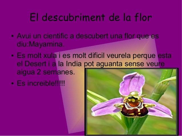 El descubriment de la flor● Avui un cientific a descubert una flor que esdiu:Mayamina.● Es molt xula i es molt dificil veu...