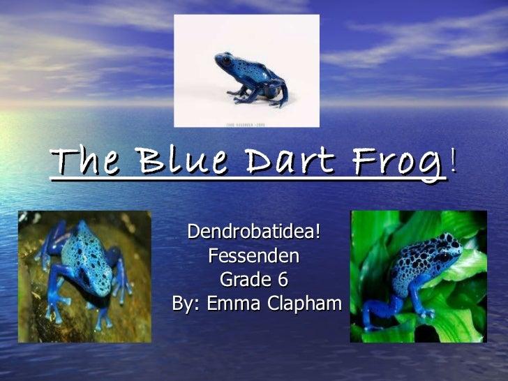 The Blue Dart Frog ! Dendrobatidea! Fessenden Grade 6 By: Emma Clapham