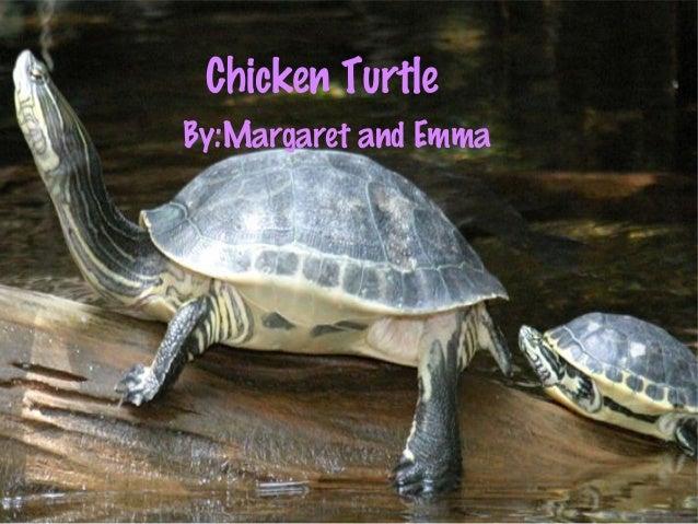 Chicken Turtle By:Margaret and Emma