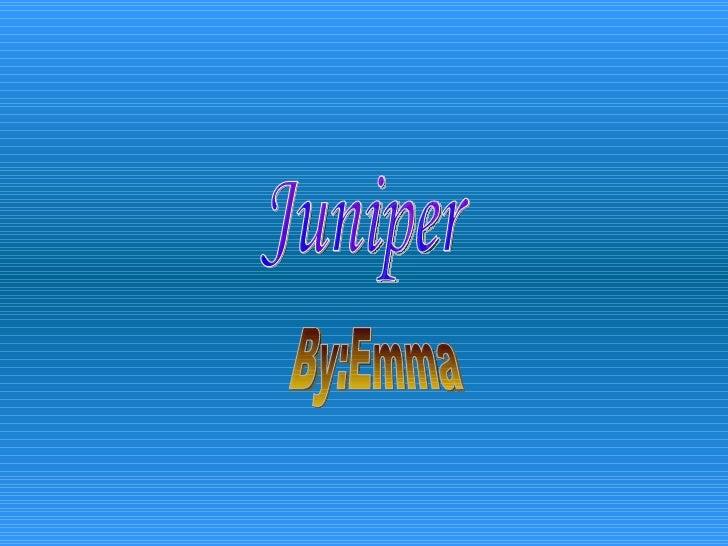 Juniper By:Emma