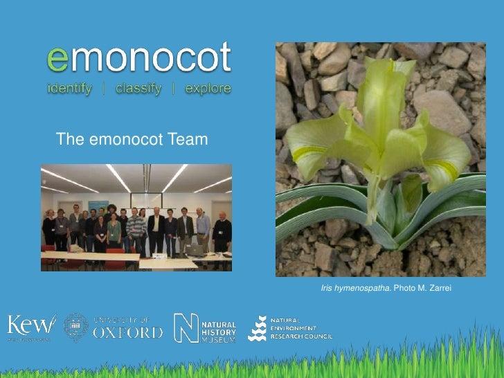 The emonocot Team<br />Iris hymenospatha. Photo M. Zarrei<br />