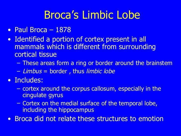 Broca's Limbic Lobe <ul><li>Paul Broca – 1878 </li></ul><ul><li>Identified a portion of cortex present in all mammals whic...