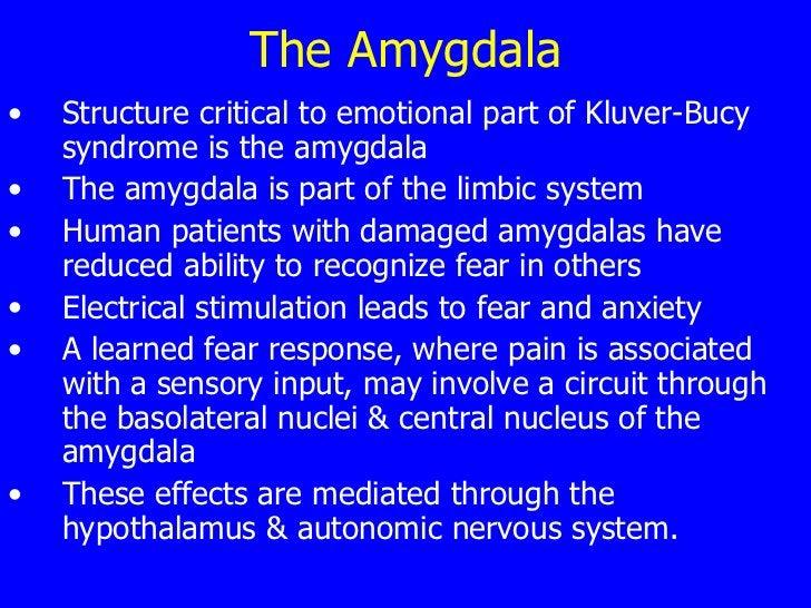 The Amygdala <ul><li>Structure critical to emotional part of Kluver-Bucy syndrome is the amygdala  </li></ul><ul><li>The a...