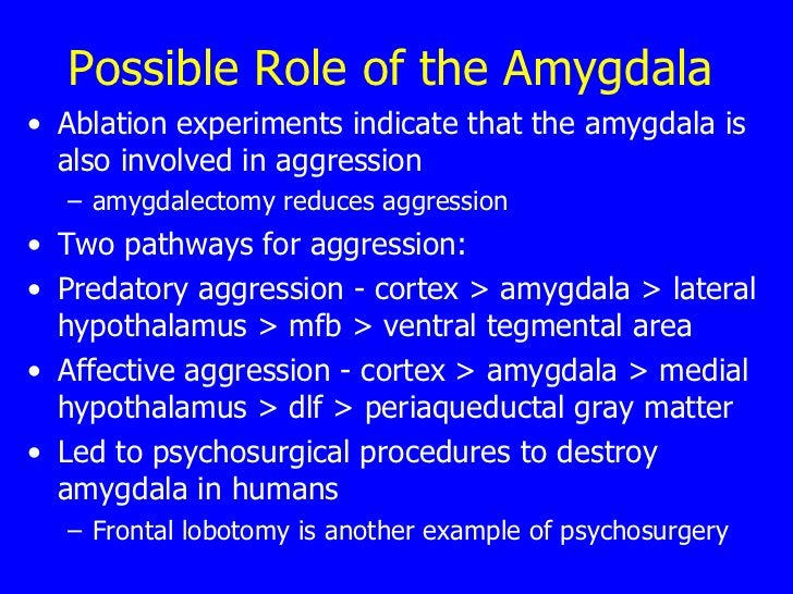Possible Role of the Amygdala   <ul><li>Ablation experiments indicate that the amygdala is also involved in aggression  </...
