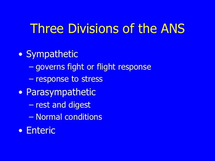 Three Divisions of the ANS <ul><li>Sympathetic  </li></ul><ul><ul><li>governs fight or flight response  </li></ul></ul><ul...