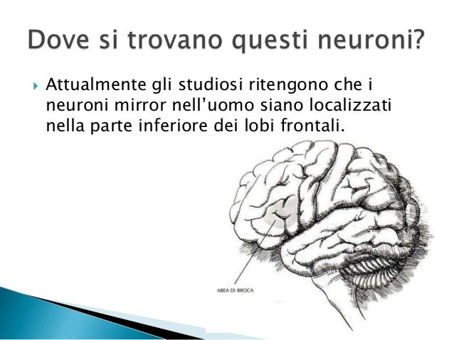Empatia neuronimirror - Neuroni specchio empatia ...