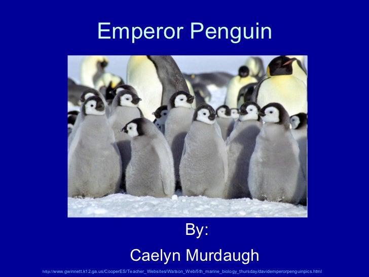 Emperor Penguin By: Caelyn Murdaugh   http:// www.gwinnett.k12.ga.us/CooperES/Teacher_Websites/Watson_Web/5th_marine_biolo...