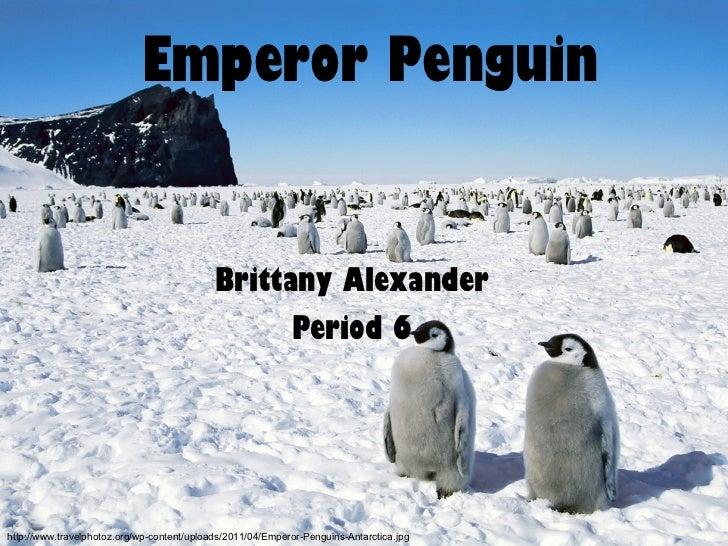 Emperor Penguin Brittany Alexander Period 6 http://www.travelphotoz.org/wp-content/uploads/2011/04/Emperor-Penguins-Antarc...