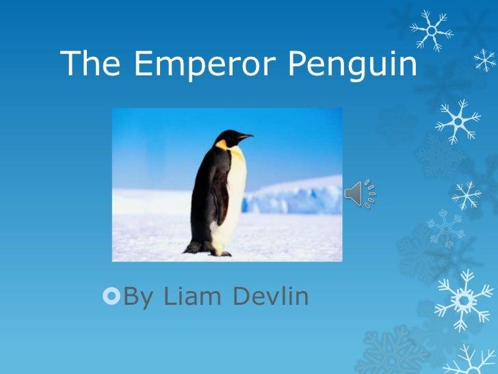 The Emperor Penguin  By Liam Devlin