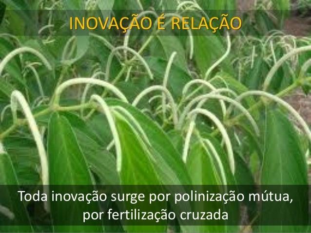 INOVAÇÃO É RELAÇÃO Toda inovação surge por polinização mútua, por fertilização cruzada