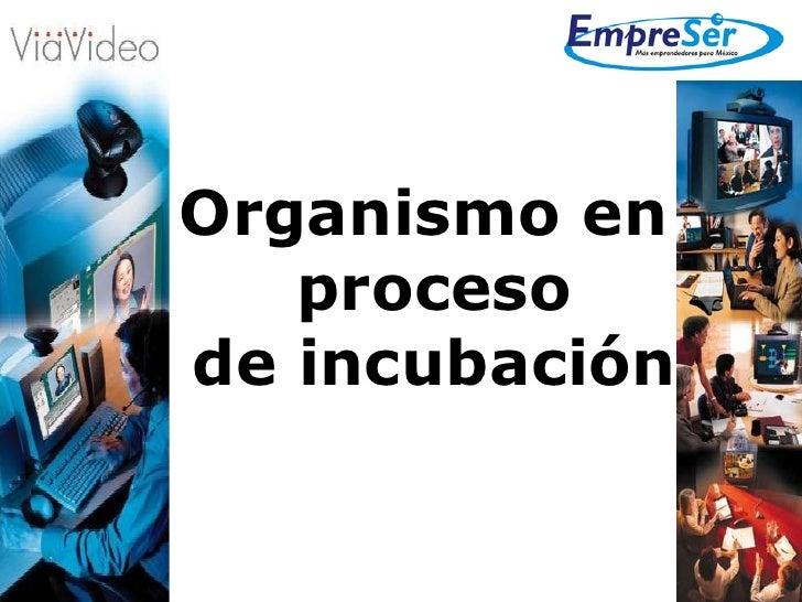 Organismo en  proceso de incubación