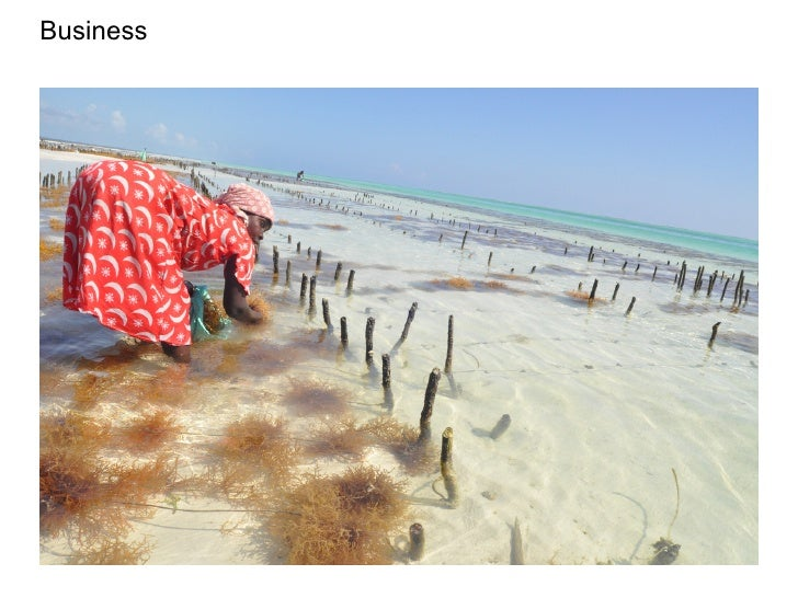 Designing an SMS-based application for seaweed farmers in Zanzibar (and why it failed for now) Slide 2
