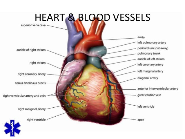 Emt Heart Diagram Electrical Work Wiring Diagram