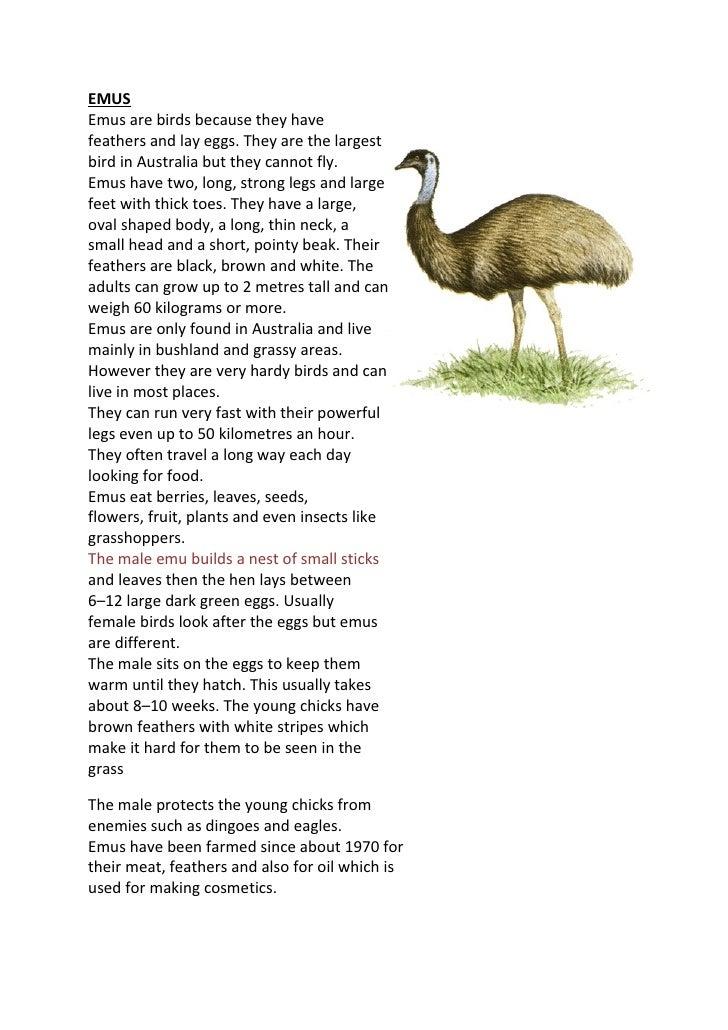 Emus Fact Sheet And Activity Worksheet