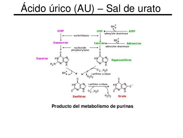 urea y acido urico en sangre captopril y acido urico puedo comer pollo si tengo acido urico