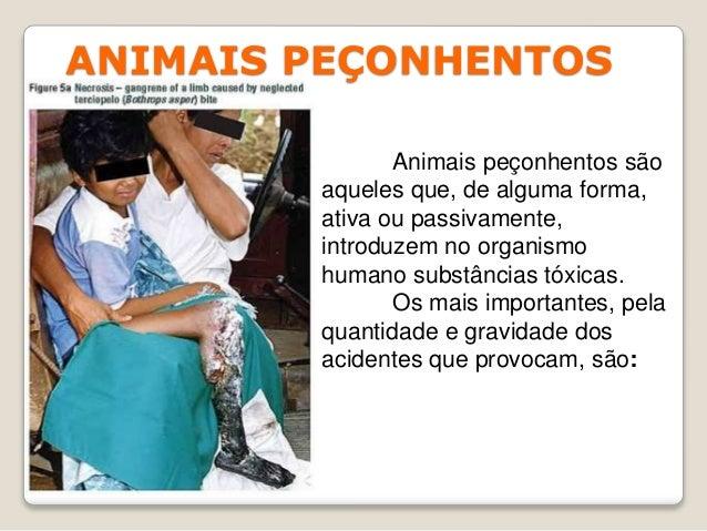 ANIMAIS PEÇONHENTOS Animais peçonhentos são aqueles que, de alguma forma, ativa ou passivamente, introduzem no organismo h...