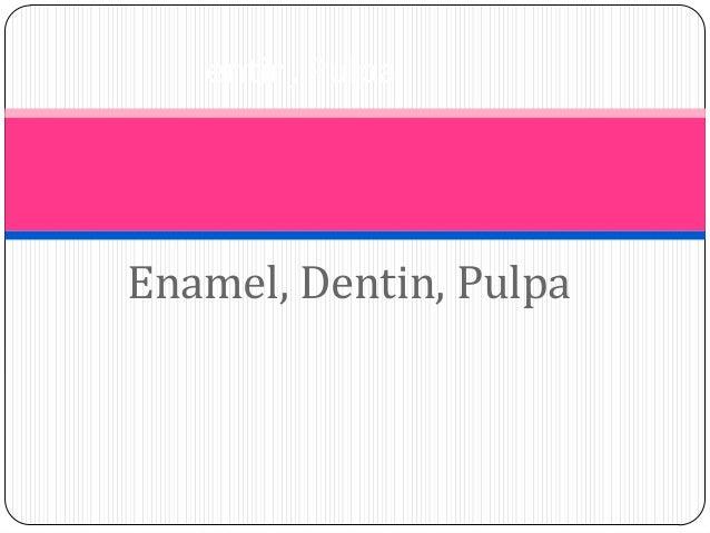 Enamel, Dentin, Pulpa entin, Pulpa
