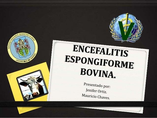 Introducción. 0 La encefalopatía espongiforme bovina (EEB, BSE) o «enfermedad de las vacas locas» es una enfermedad de rec...