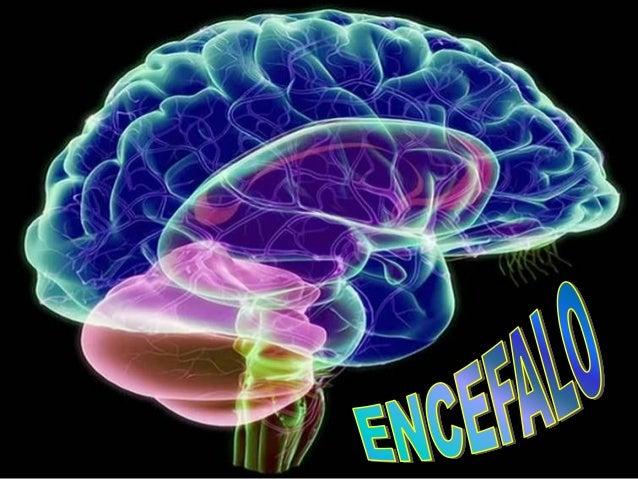 ANATOMIA- MORFOLOGIA e Memoria EFFETTI TOSSICODIPENDENZA FISIOLOGIA PATOLOGIE
