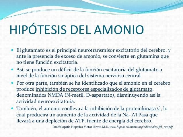 HIPÓTESIS  DEL  AMONIO   — El  glutamato  es  el  principal  neurotransmisor  excitatorio  del  ce...