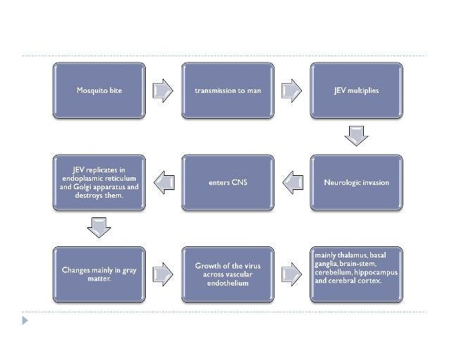 DIAGNOSIS  Virus isolation  CSF  Nasopharynx  Faeces  Urine  Detection of viral component (antigen detection)  Nucl...