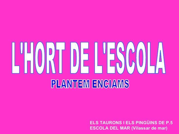 ELS TAURONS I ELS PINGÜINS DE P.5ESCOLA DEL MAR (Vilassar de mar)