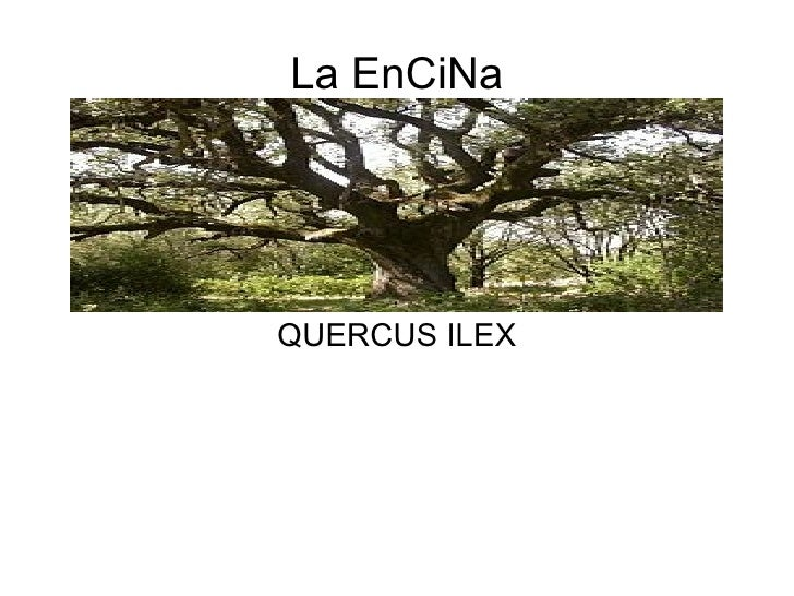 La EnCiNaQUERCUS ILEX