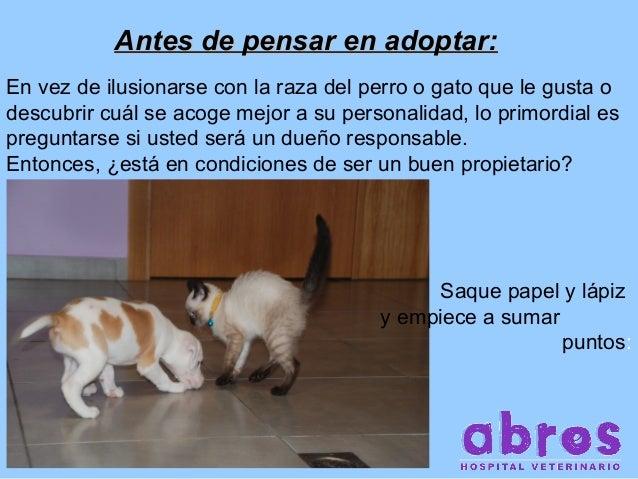 Antes de pensar en adoptar: En vez de ilusionarse con la raza del perro o gato que le gusta o descubrir cuál se acoge mejo...