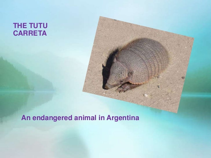 THE TUTUCARRETA An endangered animal in Argentina