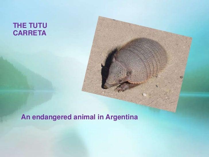 THE TUTUCARRETA An endangered animal in Argentina