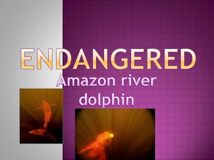 ENDANGERED<br />Amazon river dolphin<br />