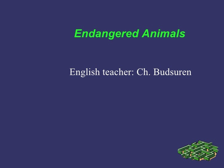 Endangered AnimalsEnglish teacher: Ch. Budsuren