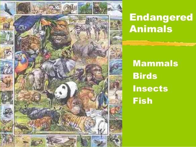 EndangeredAnimalsMammalsBirdsInsectsFish