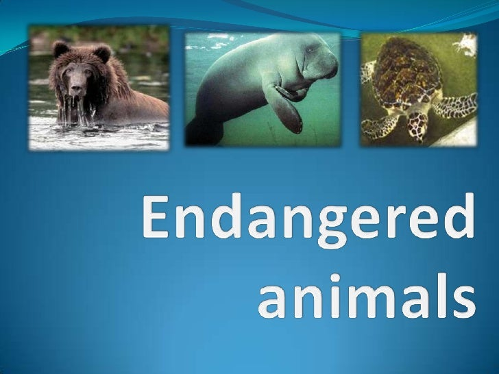 Endangered animals<br />
