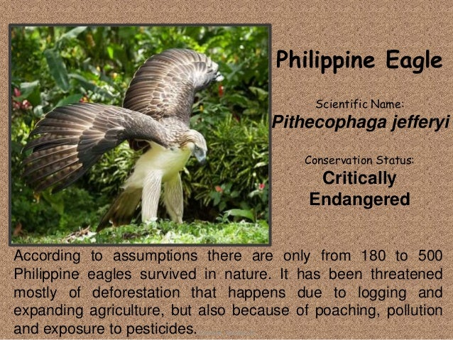 endangered species in the philippines If creation started with a pair of all-naked adam and eve that was botched with a talking snake, then certain species in the philippines are slowly approaching that.