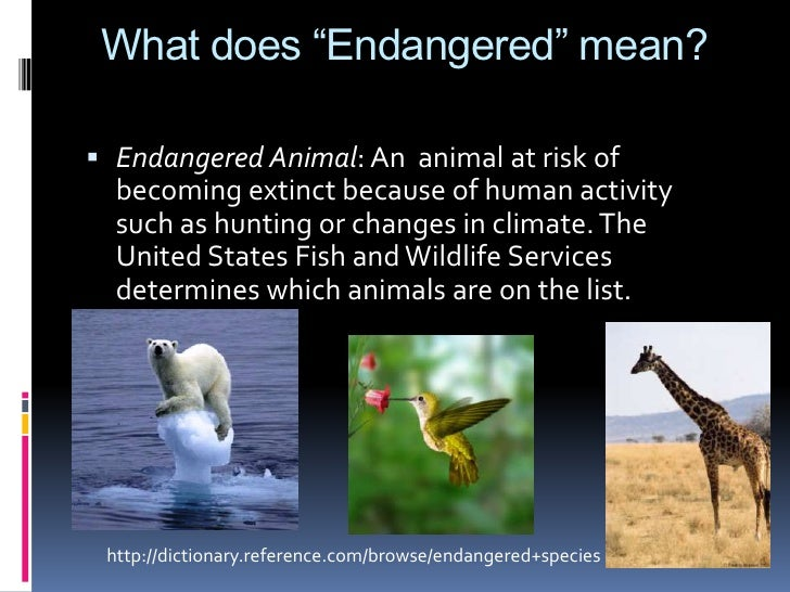 endangered species and what we can do to help these animals