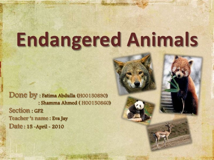 endangered species project Endangered species project objective: students will research an animal that is listed on the endangered species list they will learn about the animal including its.