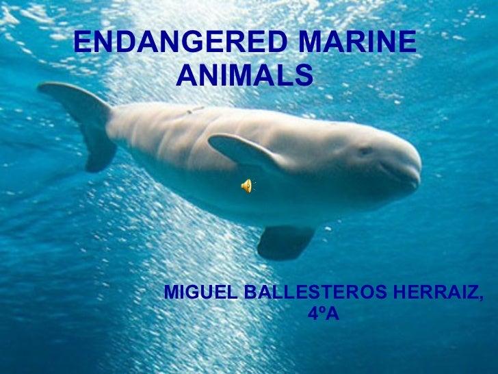 Protect Endangered Endangered Marine Animals Miguel Ballesteros Herraiz Slideshare Endangered Marine Animals