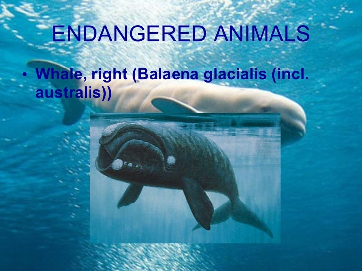 Endangered marine animals