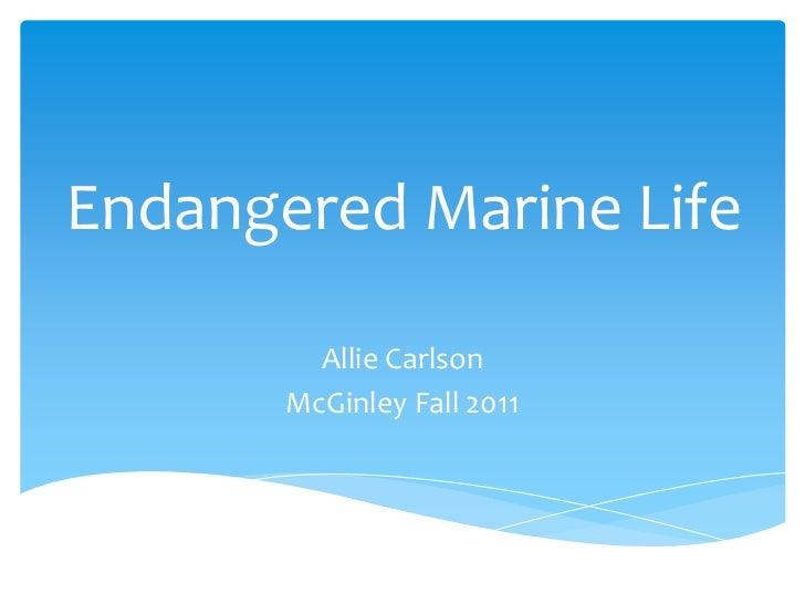 Endangered Marine Life         Allie Carlson       McGinley Fall 2011