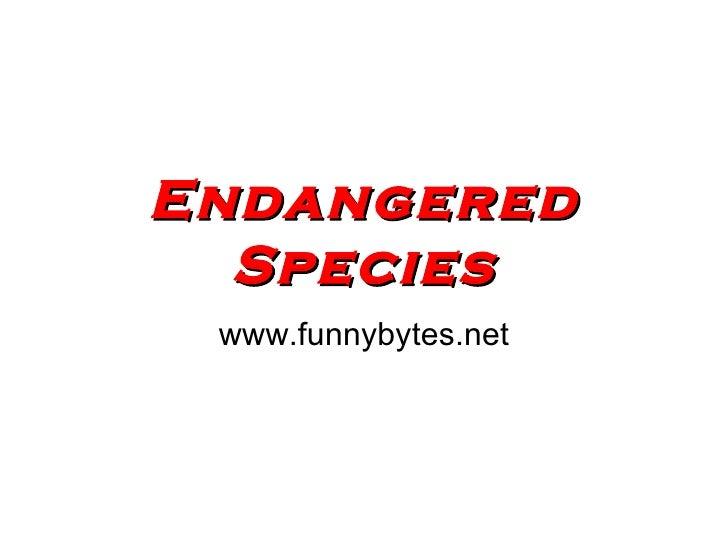 Endangered   Species www.funnybytes.net