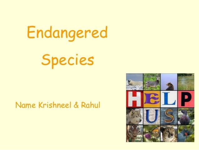 Endangered      SpeciesName Krishneel & Rahul