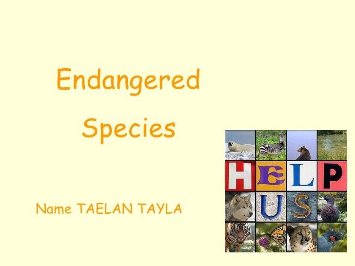 Endangered Species Name TAELAN TAYLA