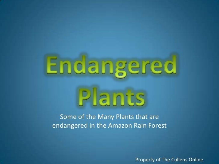 Endangered<br />Plants<br />Some of the Many Plants that are endangered in the Amazon Rain Forest<br />Property of The Cul...