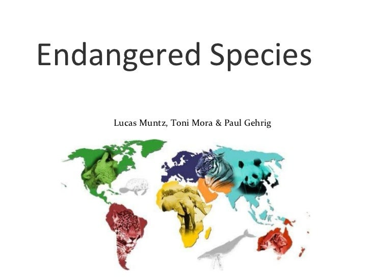 Endangered Species Lucas Muntz, Toni Mora & Paul Gehrig