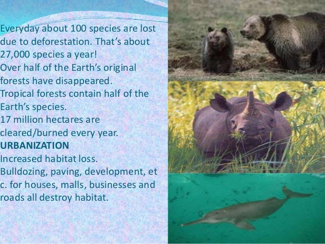 Everyday about 100 species are lost due to deforestation. That's about 27,000 species a year! Over half of the Earth's ori...
